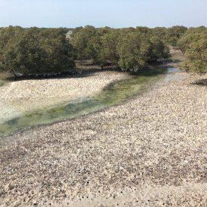 15 Mangrove Park Abu Dhabi 15